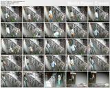 http://img18107.imagevenue.com/loc562/th_91429_Videostore.Amanmasturbates..avi_thumbs_2019.05.13_00.00.54_123_562lo.jpg